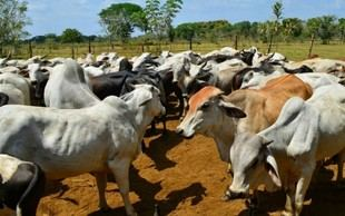 Presidente de Fedenaga denunció la prohibición de movilización de ganado