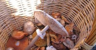 Medio Ambiente regula por resolución la recogida de setas en los terrenos forestales en Jaén
