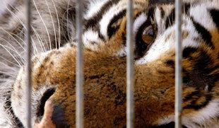 Más de 38.500 firmas exigen a la Junta circos sin animales