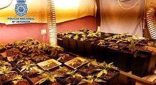 La Guardia Civil detiene en Torreperogil a dos personas tras intervenirles 297 plantas de marihuana en una vivienda