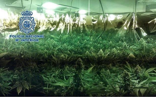 Dos detenidos por cultivar 92 plantas de marihuana en una vivienda de la zona norte de Granada