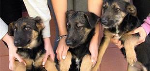 Las mascotas podr�n acceder a los locales p�blicos en M�laga si no hay prohibici�n expresa