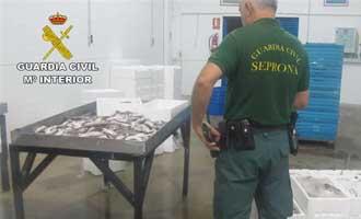 Intervenidos en Ayamonte más de 190 kilos de merluza inmadura