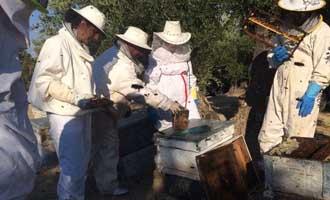 Jaén: La producción de miel cae a los 252.000 kilos en esta campaña por las altas temperaturas veraniegas