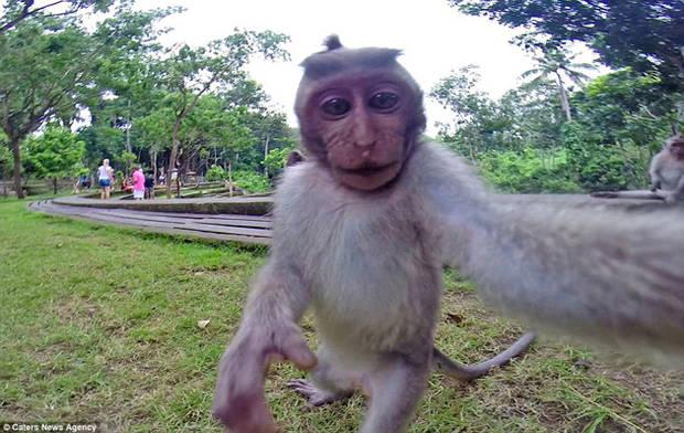 """Un macaco se robó una cámara y se toma una """"selfie"""""""