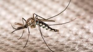 Invasión de mosquitos en el AMBA: ¿A qué se debe?