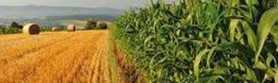 Andalucía recibe 1.989 millones del FLA en el primer semestre