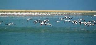 Censados cerca de 750.000 ejemplares de aves acu�ticas en humedales andaluces