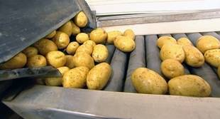 Asaja avisa de la 'paralización' que sufre la patata fresca nacional ante la 'vieja y lavada' de distribución