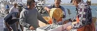 España logra mayor cuota de boquerón y cigala para la flota del Golfo de Cádiz
