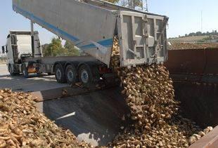 Remolacheros acaban julio con 480.000 toneladas recogidas y prevén que se pueda adelantar el fin de campaña por el calor