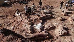 Descubre restos de dinosaurio en la Patagonia argentina