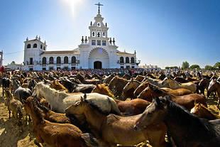 Almonte acoge este viernes la tradición ancestral de la Saca de Yeguas