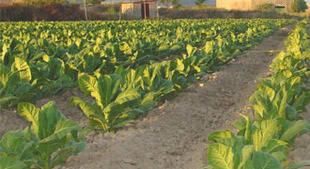 Incautadas 192.000 cajetillas de tabaco de contrabando en el Puerto de Sevilla
