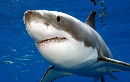 Muere tiburón en un accidente de tránsito en Florida