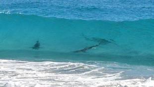 Dos heridos por ataques de tiburones en Hawai