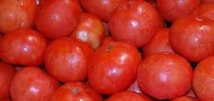 Las exportaciones de tomate marroquí en noviembre a la UE llegan a 18.664 toneladas