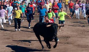 Más de cien artistas se ofrecen a actuar gratis en un festival a cambio de eliminar el Toro de la Vega de Tordesillas