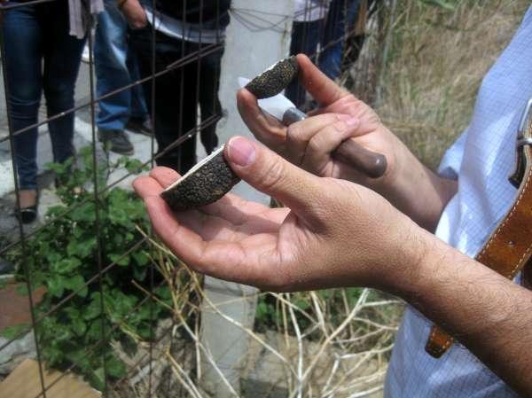 Innovación destaca las posibilidades de producir trufa en Granada