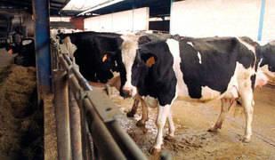 Detectado un caso de 'vaca loca' en una explotación de Salamanca