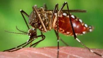 La Junta de Andaluc�a confirma en C�rdoba el primer caso de virus Zika importado en la comunidad